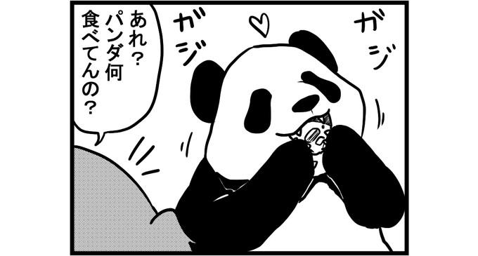 第690話 女流雀士とパンダ②